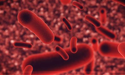 Legionella: Registo de equipamentos e planos de prevenção e controlo passam  a ser obrigatórios