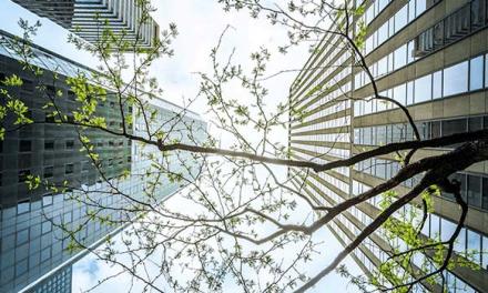 Entidades mundiais reforçam compromisso com edifícios neutros em carbono