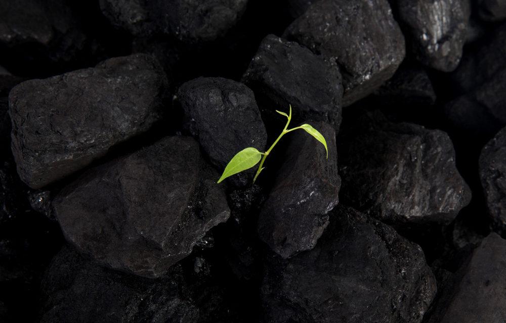Roteiro para a Neutralidade Carbónica publicado em DR